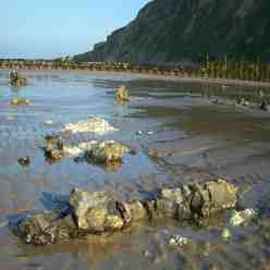 Flint backbones, long burrows, giant flint concretions found on the beach below Beeston Bump near Beeston Regis Norfolk
