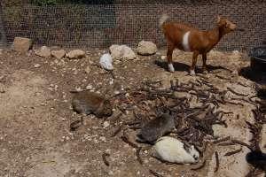 LWS animal park Marsascala Malta