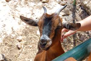 animal park zoo petting LWS malta Inspire Marsascala