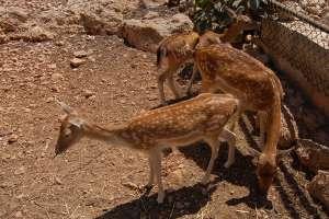 baby babies deers goats LWS animal park malta Inspire Marsascala zoo