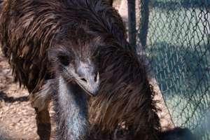 emus blue skin why LWS animal park malta Inspire Marsascala zoo