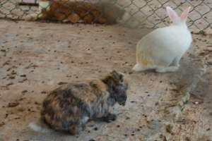 harlequin rabbits malta animal park zoo LWS Inspire Marsascala