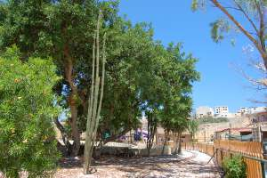 train tracks malta Marsascala LWS animal park malta Inspire zoo