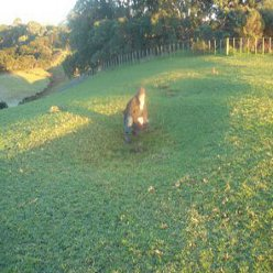 landscape archaeology tapapakanga park green horizon astronomy archeoastronomy archaeoastronomy new zealand north island