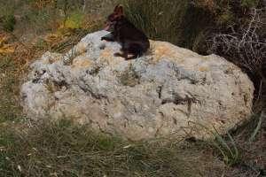 menhir standing stones malta europe mediterranean astronomy solar observatories complexes malta